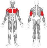 gesäßmuskel trainieren übungen